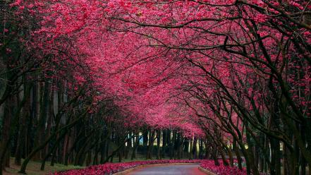 Pink flowers nature wallpaper