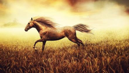 Animals cornfield creative digital art fantasy wallpaper