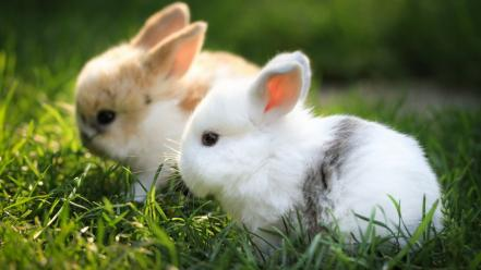 Cute rabbits wallpaper
