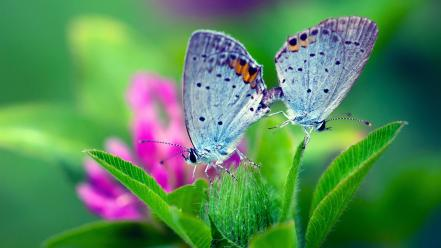 Animals butterflies green insects leaves wallpaper