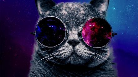 Animals cars glasses outer space stars wallpaper
