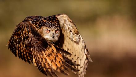 Flying birds wildlife owls eagle owl wallpaper