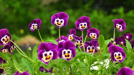 Funny flowers pictures wallpaper
