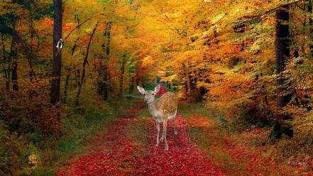 Landscapes nature trees autumn forests animals deer trail Wallpaper