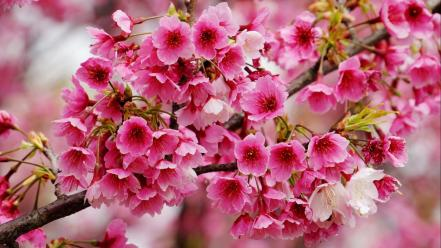 Pink flowers plants wallpaper