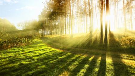 Bright forests landscapes nature rays wallpaper