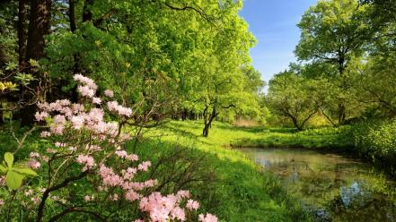 Flowers forests land landscapes nature Wallpaper