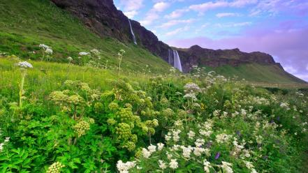 Iceland clouds flowers grass landscapes wallpaper