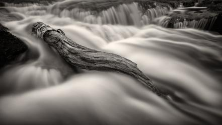 Trunks black and white flood landscapes monochrome Wallpaper