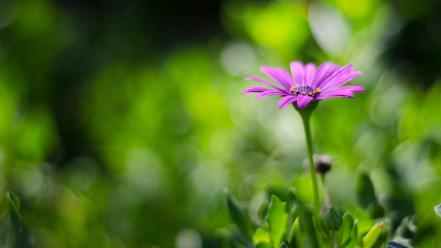 Blurred background flowers nature plants wallpaper