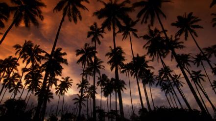 Hawaii coconut dreams kauai palm trees Wallpaper