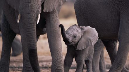 Animals baby elephants Wallpaper
