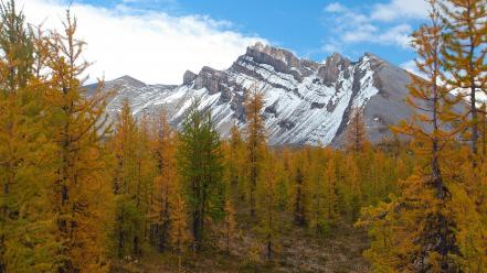 British columbia canada larch canadian rockies forests wallpaper