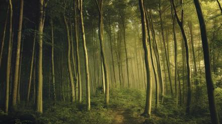Dawn forests green landscapes mystical Wallpaper