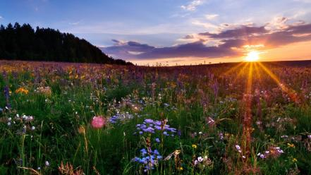 Sun flowers landscapes nature wallpaper