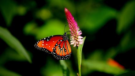 Butterfly on flower wallpaper