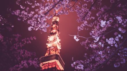 Sakura blossom japan wallpaper