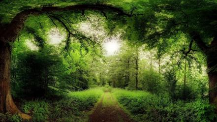 Grass green nature outdoors roads wallpaper