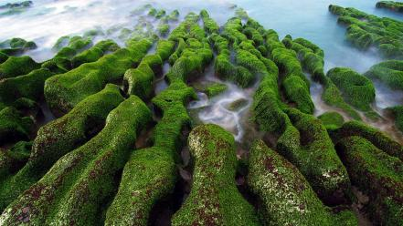 Taiwan coast landscapes moss nature wallpaper
