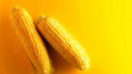 Corn food vegetables yellow background wallpaper