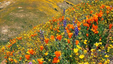 Flowers hills landscapes meadows wildflowers wallpaper