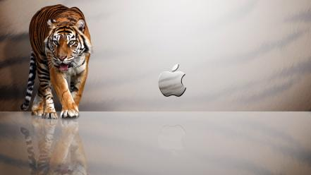 Apple Mac Tiger Wallpaper