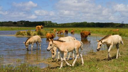 Water grass horses wallpaper
