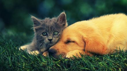 Animals cats dogs pets Wallpaper