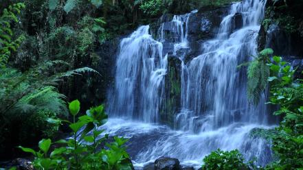 Forests jungle landscapes waterfalls Wallpaper