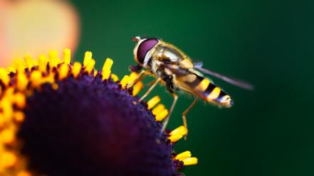 Insects macro nature wallpaper