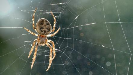 Nature spiders wallpaper