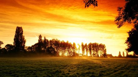 Sun fields forests landscapes nature Wallpaper