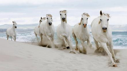 Animals beaches horses nature Wallpaper