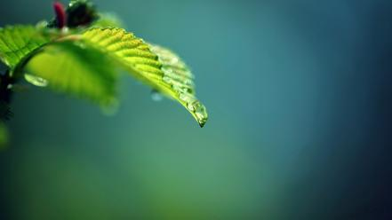 Gaussian blur leaves nature plants wallpaper
