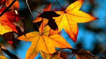 Autumn Leaves Light wallpaper