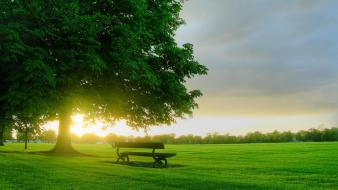 Bench In Sunlight wallpaper