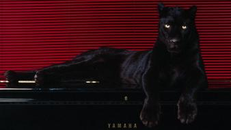 Big Cat On Piano wallpaper