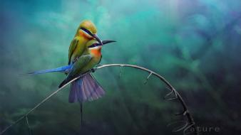 Birds wildlife bee eaters twig wallpaper