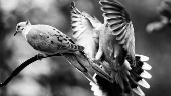 Black and white nature birds animals grayscale wallpaper
