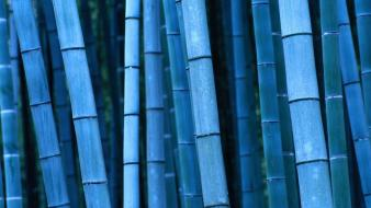 Blue Bamboo wallpaper