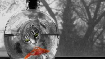 Cat Watching Fish wallpaper