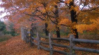 Country Fence wallpaper