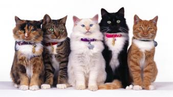 Group Of Cats wallpaper