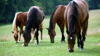 Group Of Horses Wallpaper