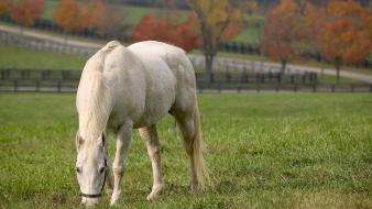 Horse Eating Grass Wallpaper