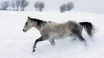 Horse In The Snow Wallpaper