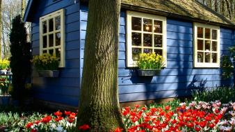 Houses tulips holland wallpaper