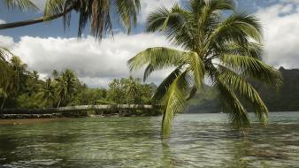 Landscapes nature palm trees wallpaper