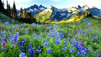 Mountains landscapes nature blue flowers wildflowers Wallpaper