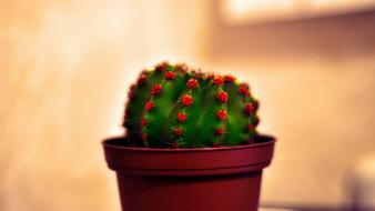 Nature plants cactus photomanipulation potted plant wallpaper